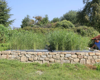 Différentes finitions sont possibles, ici le filtre à roseaux est intégré dans un mur de pierres sèches