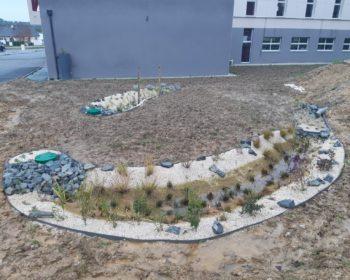 Jardin de pluie 1 mois après réalisation