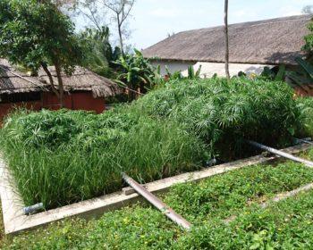 Filtres plantés pour eaux usées de restauration au Vietnam 2