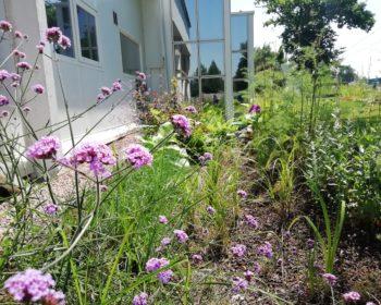 Jardin de pluie fleuri