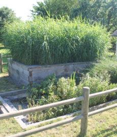 Jardin d'Assainissement Aquatiris agricole 2