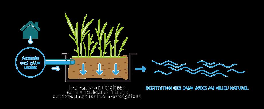 Phytoepuration Phytoflottante
