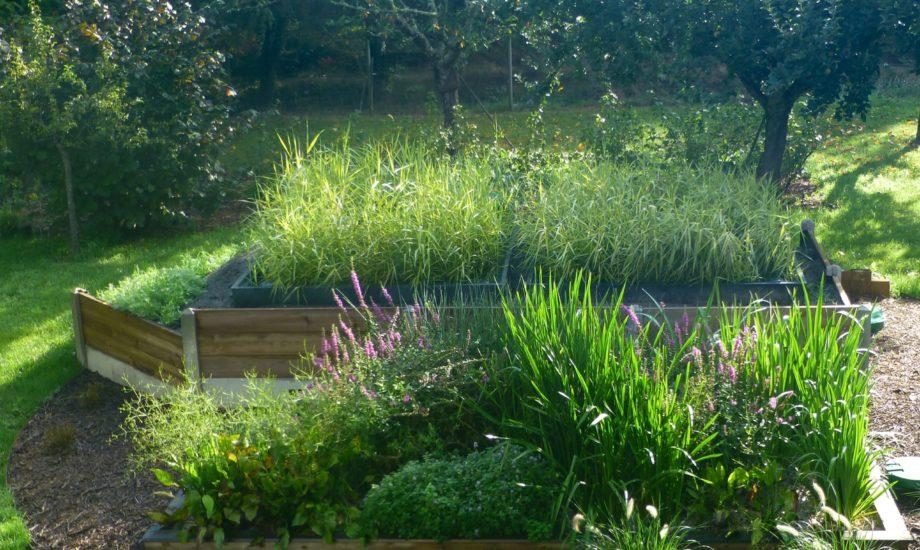 Jardin d'Assainissement Aquatiris - Gamme Iris 30