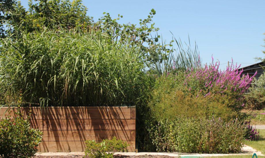 Jardin d'Assainissement Aquatiris - Gamme Iris 23