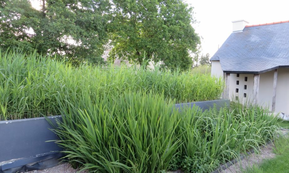 Jardin d'Assainissement Aquatiris - Gamme Iris 15