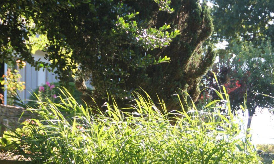 Jardin d'Assainissement Aquatiris - Gamme Roseaux 9