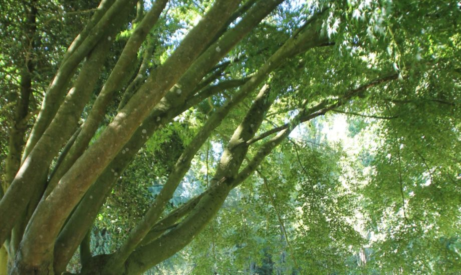 Jardin d'Assainissement Aquatiris - Gamme Roseaux 7