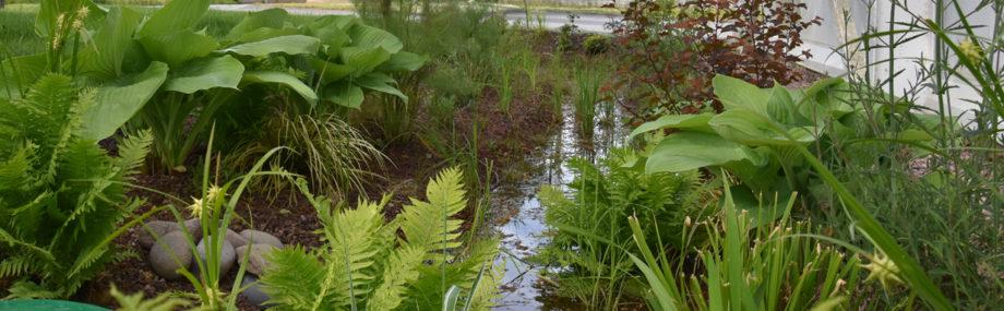 Aquatiris Jardin de Pluie infiltration