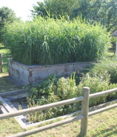 Sanitation Garden 1