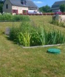 Sanitation Garden 31