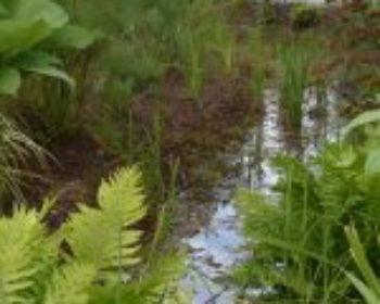 Jardin de Pluie